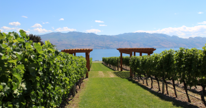 Best of BC wine, BC wine, Quails Gate, Summerhill Pyramid Winery, Biodynamic, organic, old vines restaurant, sunset organic bistro, Volcanic Hills