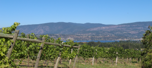 Tantalus Vineyards, Kelowna, BC wine, Riesling, David Paterson